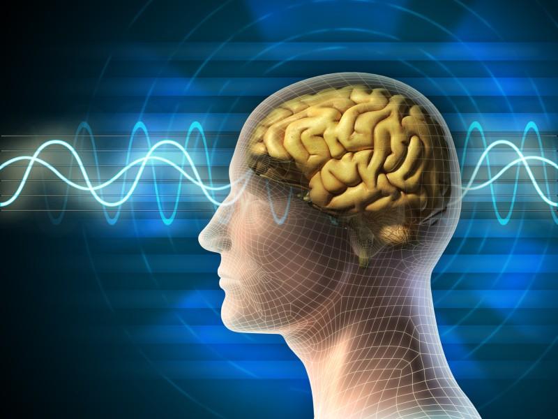 human brain signals